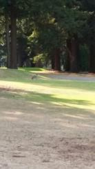 Glendoveer Golf Course