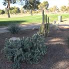 Wigwam Golf and Country Club