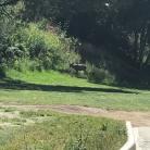 DeBell Golf Course